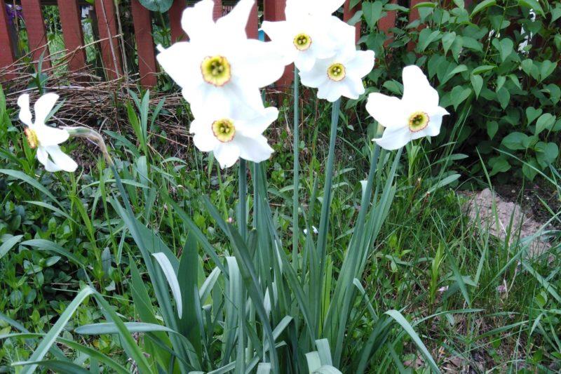 Aspekt wczesnowiosenny w ogrodzie