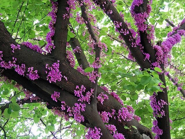 Rośliny z kwiatami na pniu